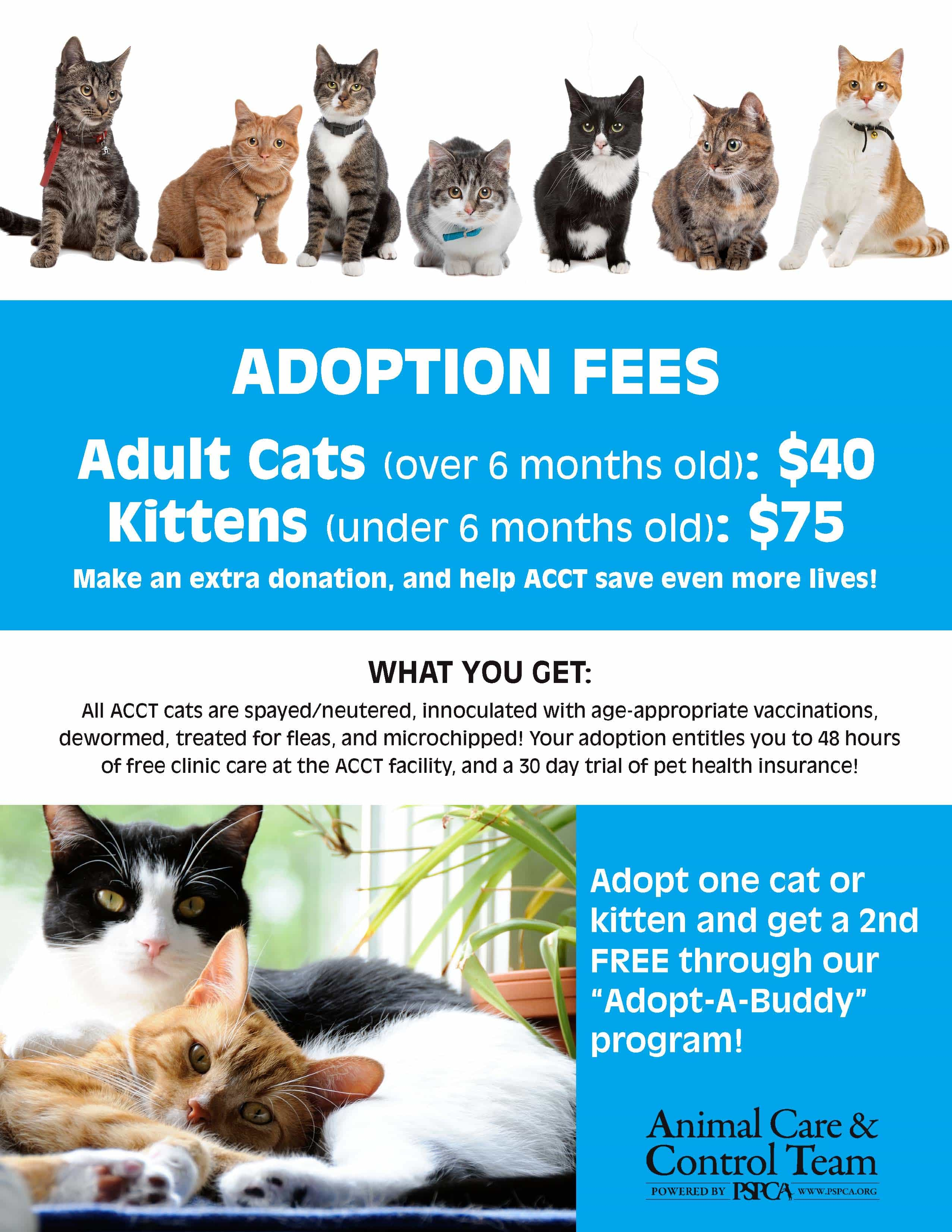 Acct Begins Cat Adoptions At New Petco In Andorra This Weekend Acct Philly