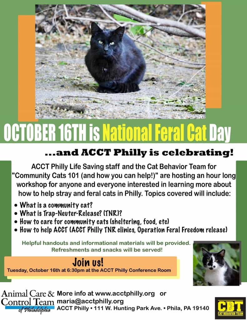 october 16th is national feral cat day acct philly