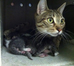momma and kittens