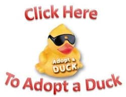 adoptaduckbutton