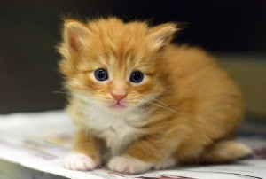 Newborn Kittens Need Your Help | ACCT Philly