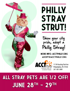 philly-stray-strut