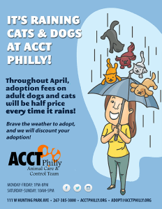 april-raining-cats-and-dogs-2015_72