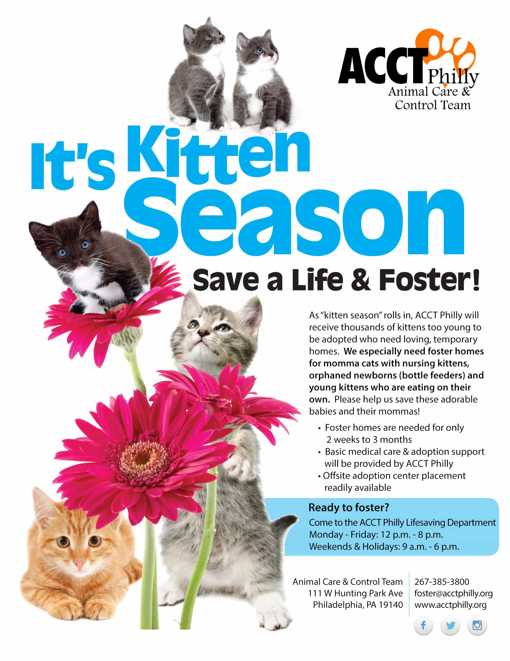 Kitten Foster Homes Needed Acct Philly