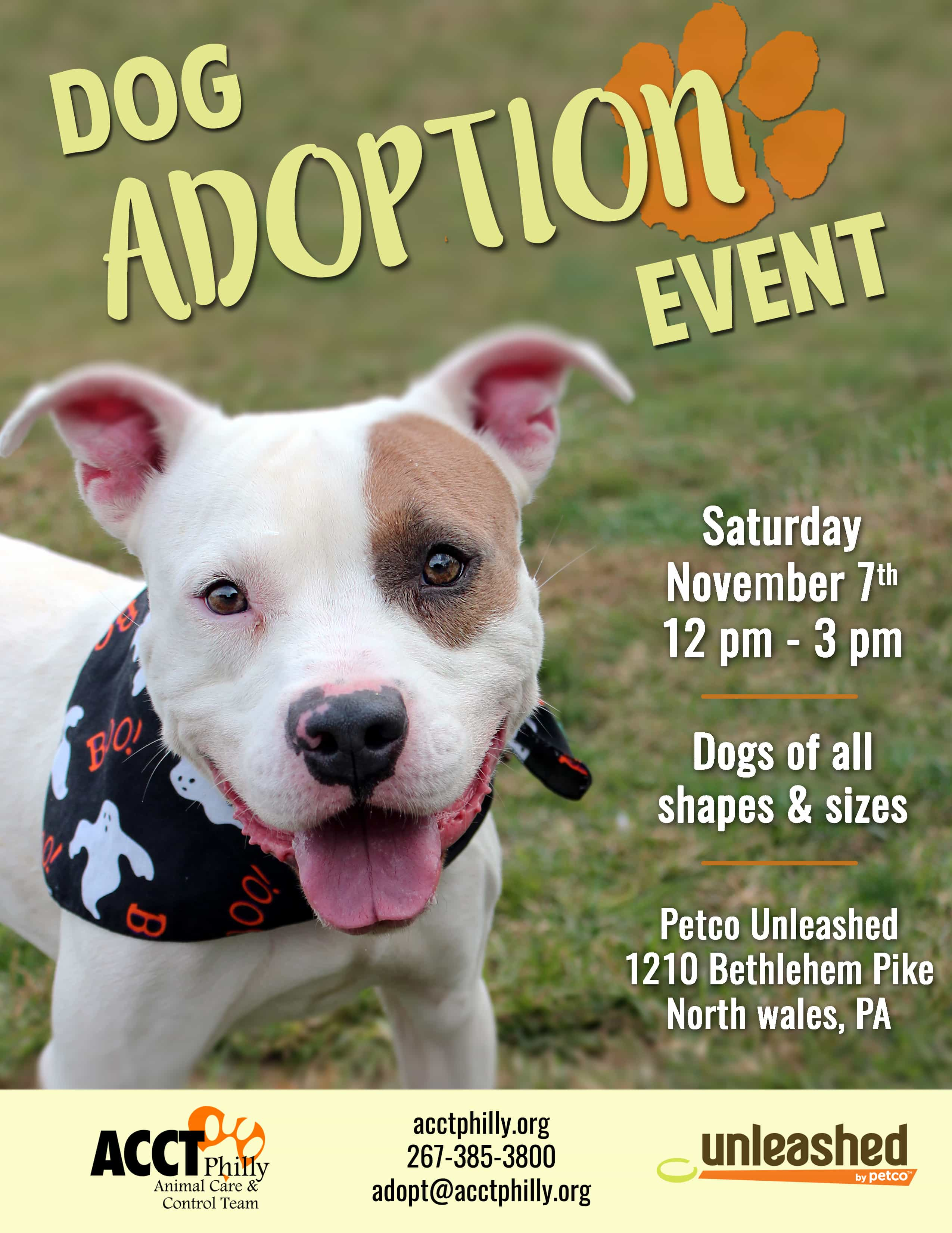 November Adoption Pricing And Events Acct Philly