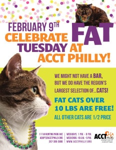 fat cat tuesday corrected