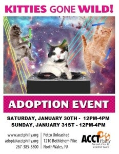 kitties gone wild JANUARY16