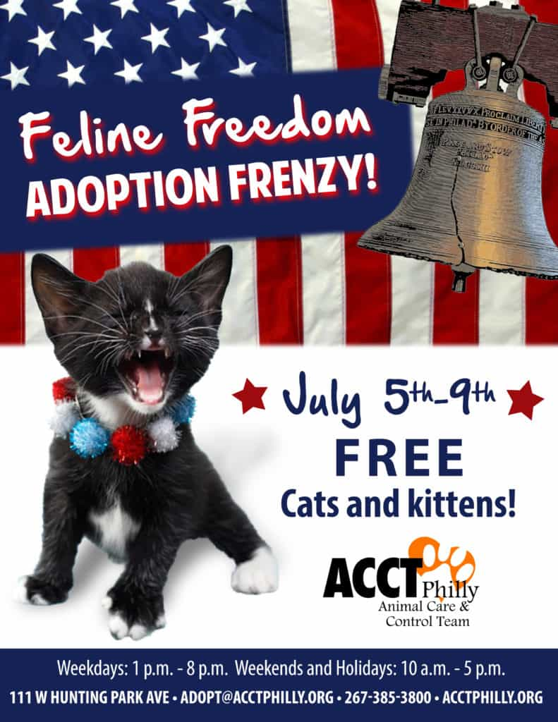 feline freedom adoption frenzy 2016_edited