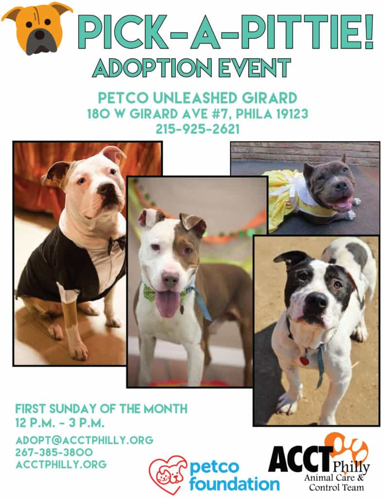 Pick-A-Pittie at Petco Girard Ave | ACCT Philly