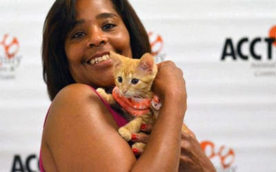 Clear the Shelters – Quick Tips!