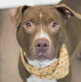Kurt Russell – A36715933 – Super Dog Friendly!