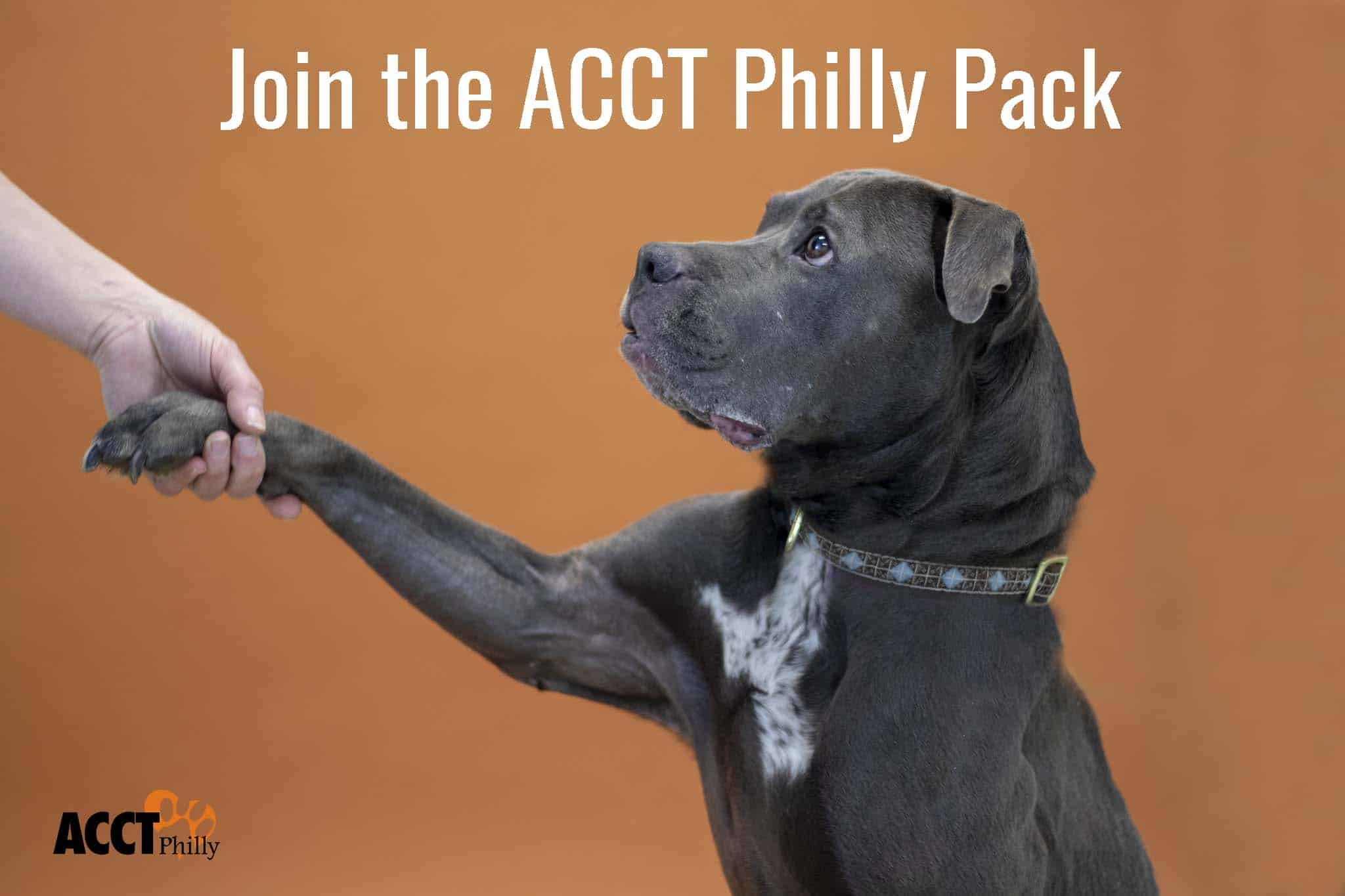 Careers Acct Philly