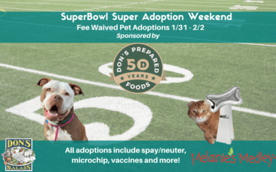 FOR IMMEDIATE RELEASE: With ACCT Philly full, the shelter announces fee waived adoptions and introduces a new team: The Underdogs