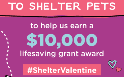Post a #ShelterValentine and Help Us Earn a Lifesaving Grant!