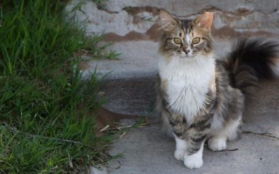 ACCT Philly Relaunches TNR Program