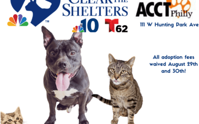 ACCT Philly's #CleartheShelters Weekend